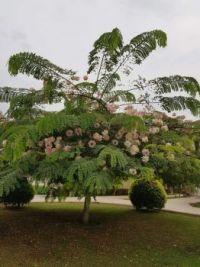 Tree, Marsa Alam, Egypt