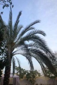 Barsha Garden