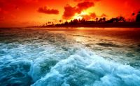 67367818-tropical-wallpapers