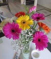 Gerbera mix bouquet.