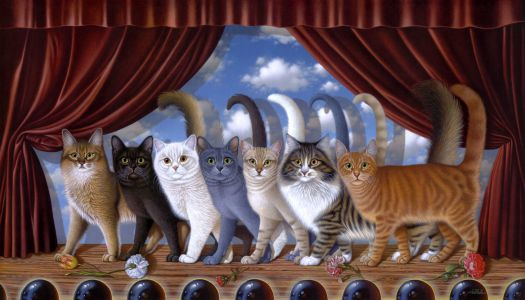 The Show Cats