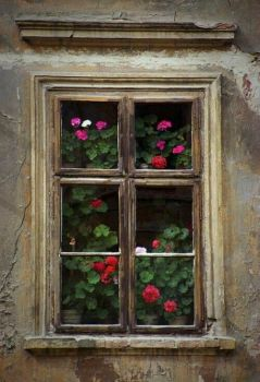 Decay and Geraniums