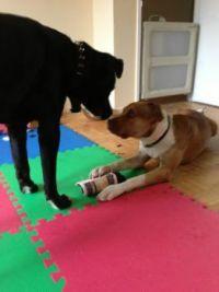Tyson et stewie