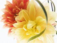 Kvetiny 3