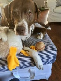 Mikie-Boy with toy duck #2