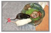 """THEME: ... SMALL PETS """"VALENTINES SAMMY & SABRINA tails entwined"""""""