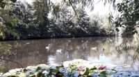 na rybníčku