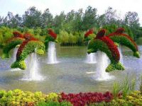 Dolphin Topiaries