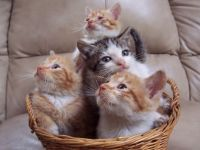 Basket of cats!