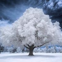 Frosted over tree in Salt Lake City, Utah