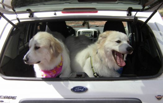 Aspen & Willow ready to ride