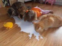 milk - mléko