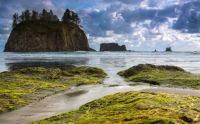 Olympic National Park  - Cliffs Coast