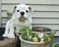 Would I lie to you? I was NOT eating this delicious plant!