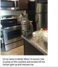 Cat shaming series