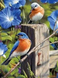 Ptáčci a květy