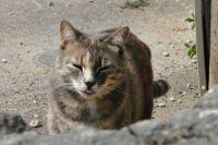 Unknown mocking cat