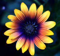 """""""fullflower"""""""
