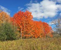Fall foliage.4