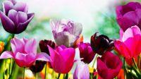 superb spring