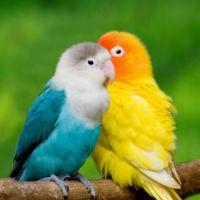Lovebirds-1024x1024