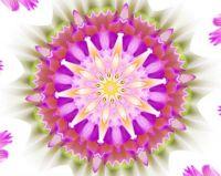 Kaleido Lotus