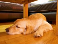 Dogs Hogging All The Best Nap Spots