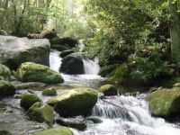 Smoky mountain trout stream