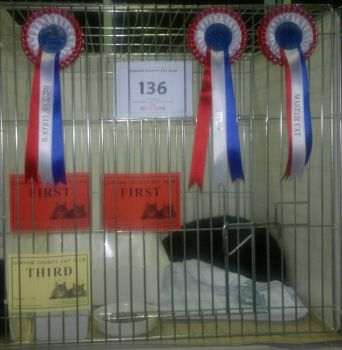 My first cat show