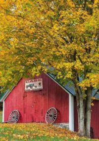 Old Barn at Maple Grove Farm - Vermont...