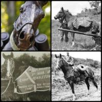 Theme: Horses - Sgt Reckless, a Korean War Hero