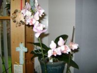 Angie.s Orchids