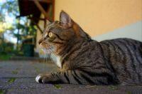 Cat - Small