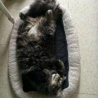 Tago lazing around. A very Happy Cat! My Prince :-)