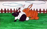 Sarah's bunnies