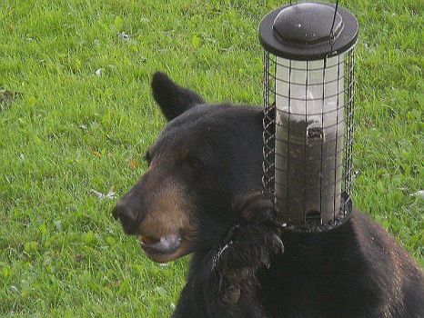 I Already Told You Once...Keep Your Paws Off of My Birdfeeder!!