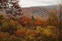 Late fall color along the Blue Ridge Parkway