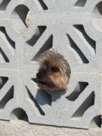 Guard Puppy
