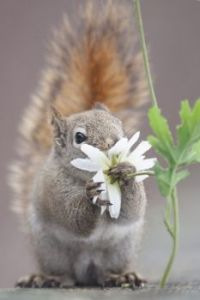 Squirrel & Daisy...