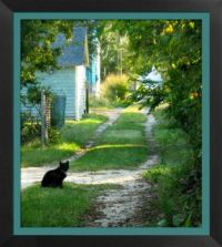 Cat in the Lane in Lewes Delaware
