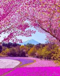 Another Gorgeous Japanese Spring