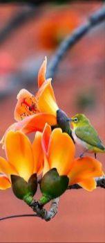 Prachtig dat oranje