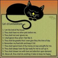 Cats-10-Commandments