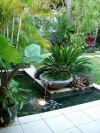 Tropical Garden with Cycads and a water feature.