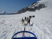 Dog sled on Mendenhall glacier, Juneau, Alaska