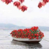 Květinová lodička☀️🌼🍀