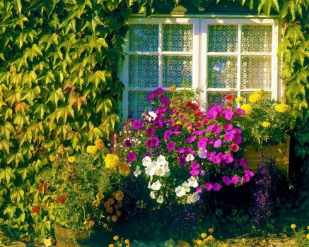 My Window Jardin
