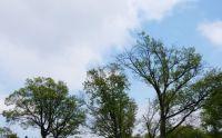 Trees on 4th Street