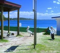 Pelican BBQ area