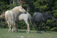 2007 CLOUD AND MARES